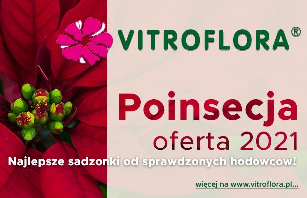 Vitrofora Poinsecja