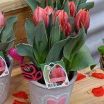 tulipany_Pretty Princess