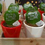 Hoya kerrii - kolejny pomysł na walentynkowy prezent