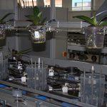 PGC Speed-e-flex 3-m-ter Laak Orchids_fot. A-Cecot