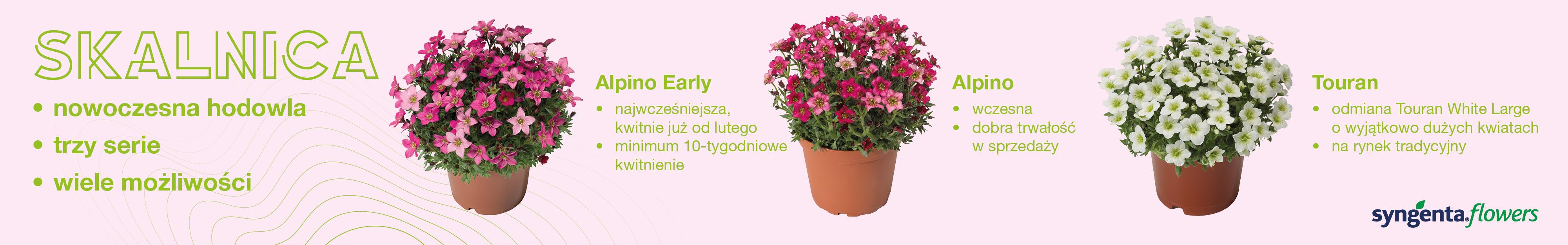Syngenta Flowers 1