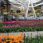 Kolekcja odmian tulipanów jest opisana, ma więc też aspekt poznawczy_Keukenhof 2019_fot_AC