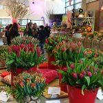 W pawilonie prezentowano kwiaty cięte i kompozycje z nich, keukenhof 03-2019