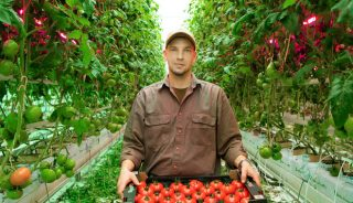 Sławomir Kwaczyński z Gospodarstwa Ogrodniczego Piotr Kociszewski prezentuje pomidory malinowe z uprawy doświetlanej w systemie Full LED