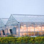Nowoczesna szklarnia z uprawą doświetlaną, od kilku lat w Polsce rośnie zainteresowanie takimi inwetycjami