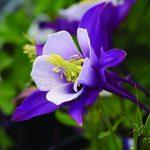 Earlybird™ Purple White