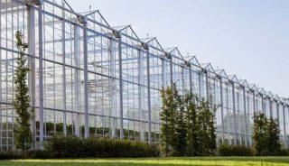 Holenderska firma Gakon Horticultural Projects, budująca szklarnie została przejęta przez Netafim, fot. Gakon