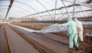 Przykrywanie gleby po zastosowaniu preparatu Basamid.