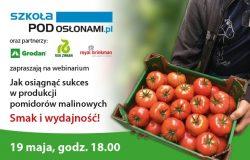 Jak osiągnąć sukces w produkcji pomidorów malinowych? Smak, wydajność, aspekty uprawowe!
