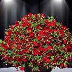 Calibrachoa hybrida Cabaret Early Bright Red, fot. Florensis