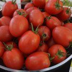 Testowana pod numerem DRC936 odmiana pomidora malinowego marki De Ruiter o śliwkokształtnych owocach