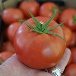 Nowy pomidor malinowy testowany pod numerem DRTG 4839