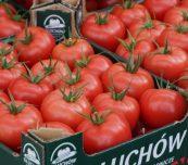Owoce pomidora malinowego Buenarosa z uprawy Braci Chrzanów z Głuchowa