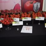Ekspozycja owoców odmian pomidora malinowego i czerwonego marki De Ruiter podczas spotkania w Łaszkowie