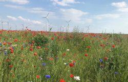 Dekarbonizacja rolnictwa w Europie - rozwiązania firmy Bayer