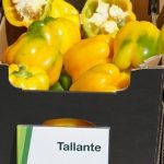papryka Tallante
