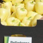 Papryka Belladonna