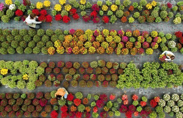 Konferencja, którą 30 IX organizuje AIPH we współpracy z targami GreenTech oraz FSI, będzie dotyczyć zasad zrównoważonego rozwoju w kwiaciarstwie, fot. AIPH