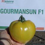 pomidor Gourmansun F1