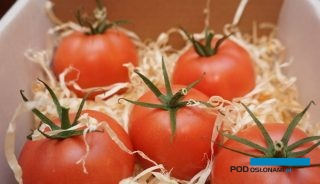 Pomidor malinowy Buenarosa