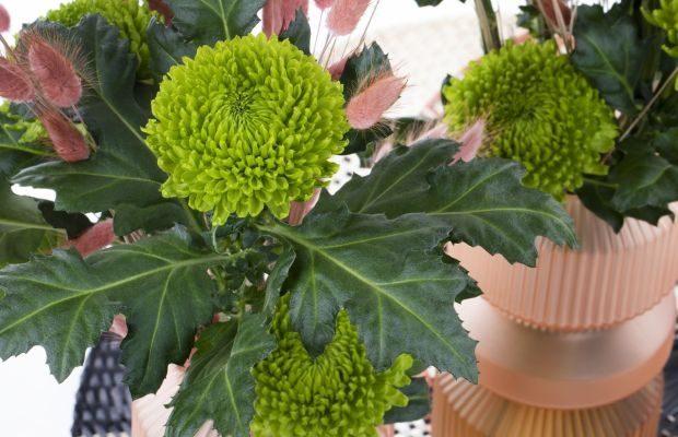 Wśród nowych odmian chryzantemy pojawiła się m.in. wielkokwiatowa Alemani, fot. Deliflor