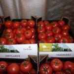 Owoce pomidorów malinowych DRTG 4839 oraz Yarimaru