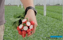 'Growing a new Era' - ogrodnicze trendy podczas Międzynarodowych Dni Otwartych firm Hazera i HM.Clause