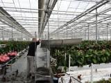 Resztki roślin z likwidowanych zagonów wywozi się owiniętymi folią wózkami duńskimi