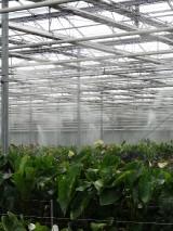W uprawie funkcjonuje system wysokociśnieniowego zamgławiania