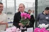 Bart Kurijer gratulował polskiemu producentowi wyprodukowania tak okazałych cyklamenów z grupy Maxora