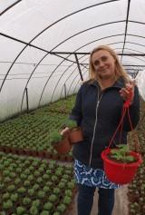 Katarzyna Łubińska, która wraz z mężem Mirosławem prowadzi Ogrodnictwo Zugaj, produkuje byliny pod osłonami i na zewnątrz