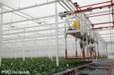 Dzięki wózkom inspekcyjnym z firmy Van Zaal pracownicy mogą przemieszczać się nad roślinami
