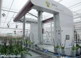 Robot, który ustawia rośliny na kontenerach