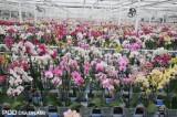 Na górnym poziomie systemu WPS rośliny czekają na spakowanie, stanowi on dodatkowe 3 tys. m2 powierzchni produkcyjnej