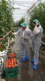 """... oraz prezentując odmiany pomidorów francuskiej firmy Gautier (na zdjęciu wraz z redaktor czasopisma """"Pod Osłonami"""" - Anną Wize)"""