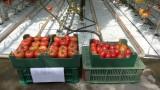 Owoce francuskich odmian
