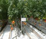 Rośliny w gospodarstwie pp. Matysiaków nawożone były Hydrovitem...