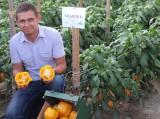 Kamil Bartkowski z owocami odmiany Tallante F1