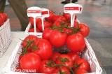 Całogronowy pomidor DRW 7812 F1