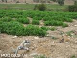Uprawy pomidorów w Iranie są nawadniane - fragment instalacji