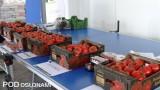 Ekspozycja odmian w czasie Dnia Pomidora w gospodarstwie A.A. Koconiów
