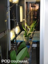 Zrobotyzowane sortowanie roślin, fot. A.