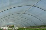 Uprawa prowadzona jest również w tunelu z podnoszonymi ścianami bocznymi
